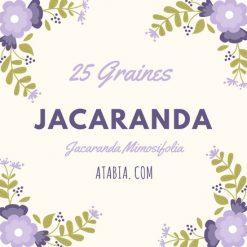 Jacaranda Mimosifolia Graines pour semis