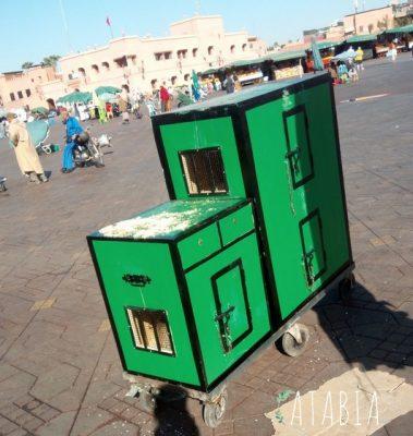 Cages ou sont entreposés les singes de la place jema el fna à Marrakech