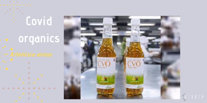 Bouteille de tisane Covid-organics à l'artemisia