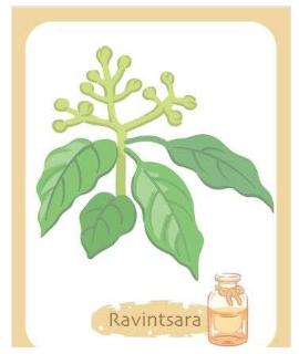 Illustration de l'huile essentielle ravintsara
