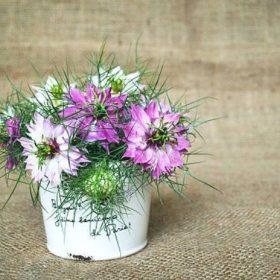 Petite composition en bouquet de Nigelles roses