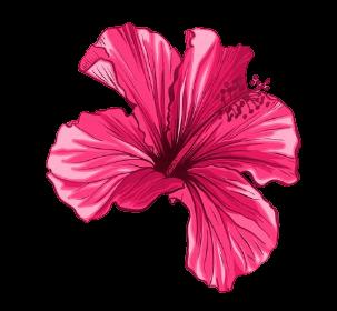 Fleurs de hibiscus