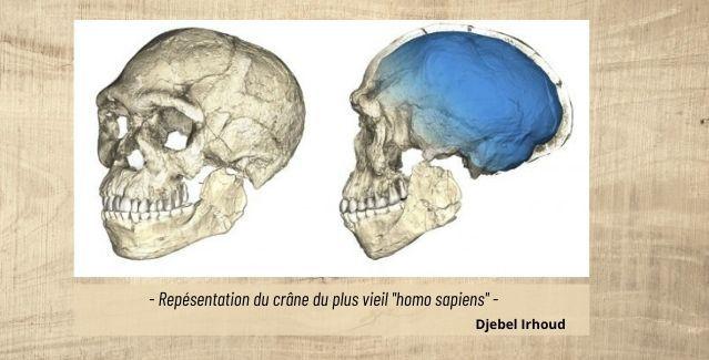 représentation du crane Homo sapiens Djebel irhoud
