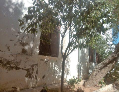 jardin_vente_riad_maison_marrakech_safi_demeure-traditionelle